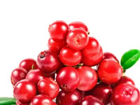 os-efeitos-terapeuticos-do-cranberry